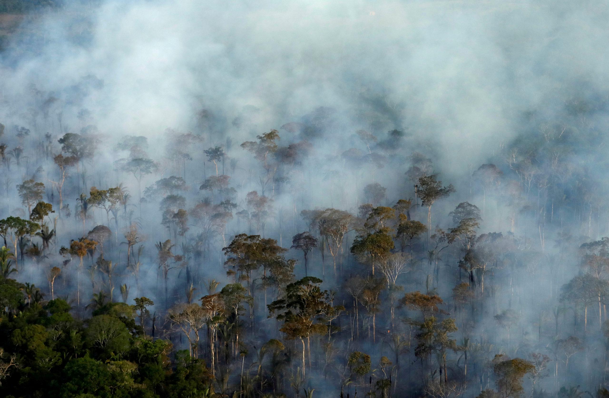 La déforestation de l'Amazonie à son plus haut niveau depuis 11 ans