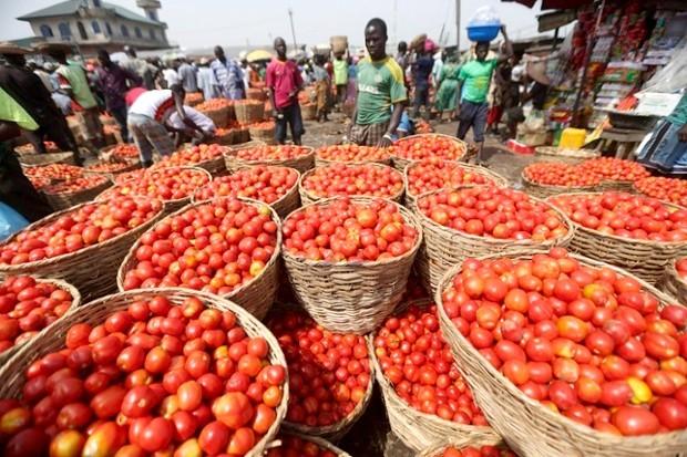 Cameroun : le gouvernement aux chevets de la filière tomate avec un plan de sauvetage