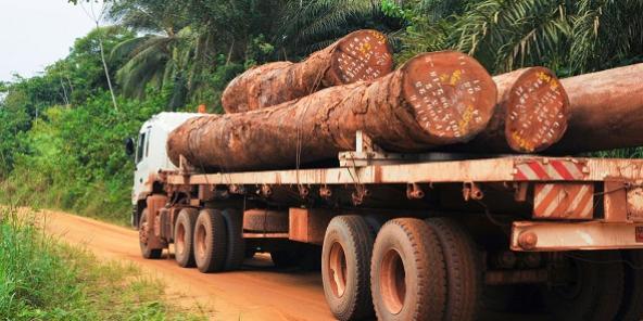 Cameroun : un rapport accablant accuse les opérateurs vietnamiens d'exploiter illégalement les forêts du pays