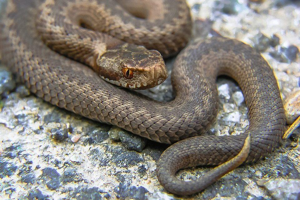 Cameroun : une cargaison de 80 serpents en partance pour Londres saisie par la douane à l'aéroport de Douala