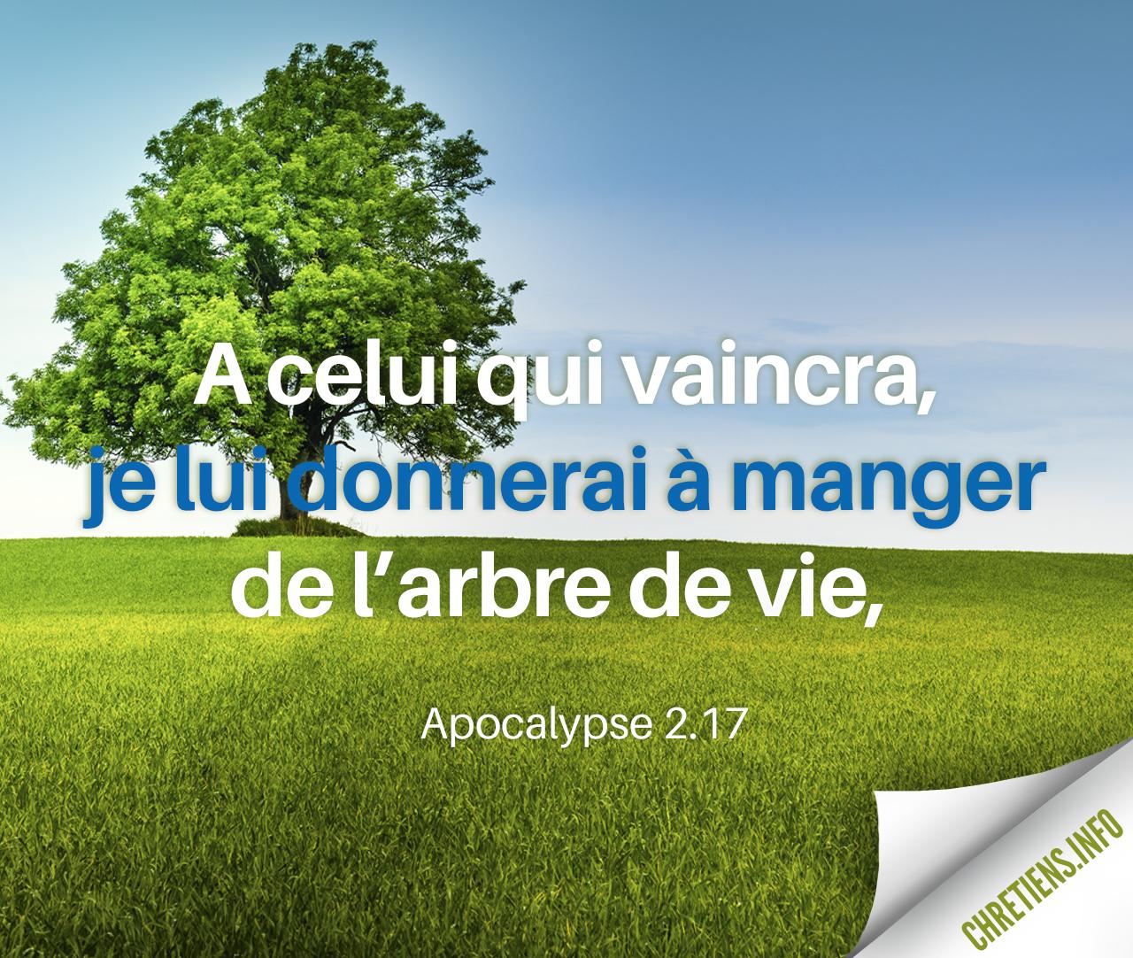 A celui qui vaincra je donnerai de la manne cachée. Apocalypse 2:17