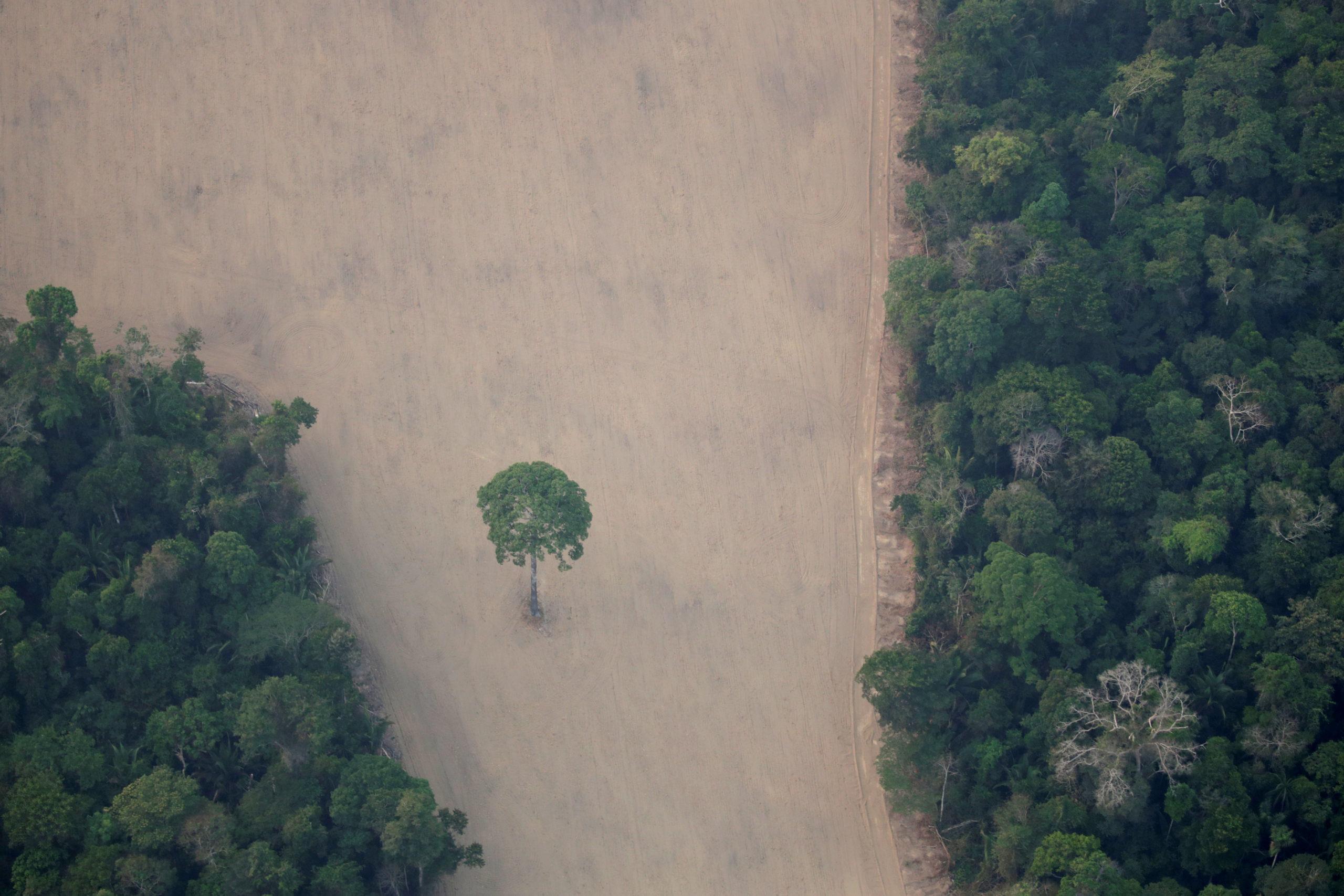 Brésil: Huit pays européens demandent des mesures contre la déforestation en Amazonie