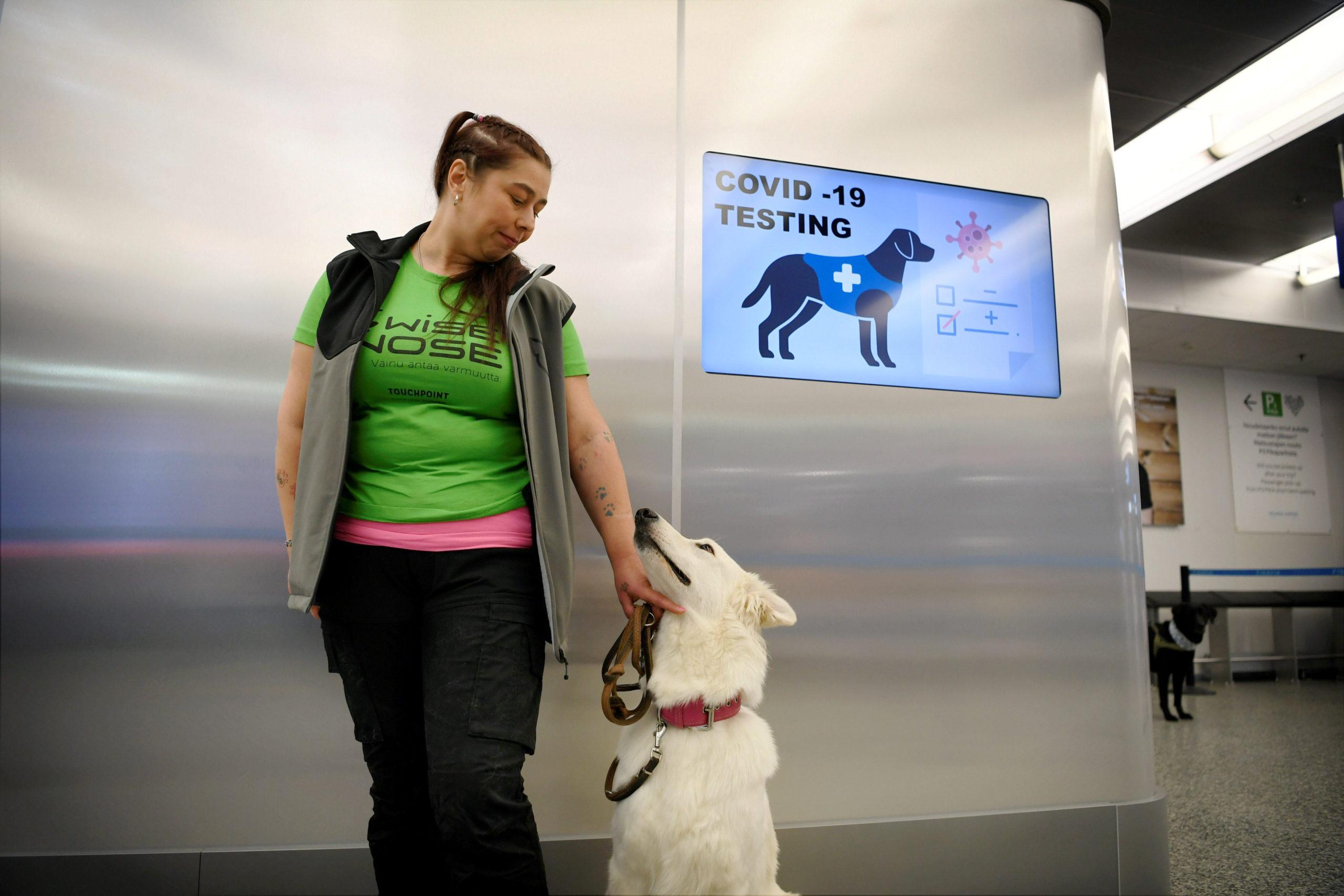Des chiens entraînés à détecter le coronavirus à l'aéroport d'Helsinki