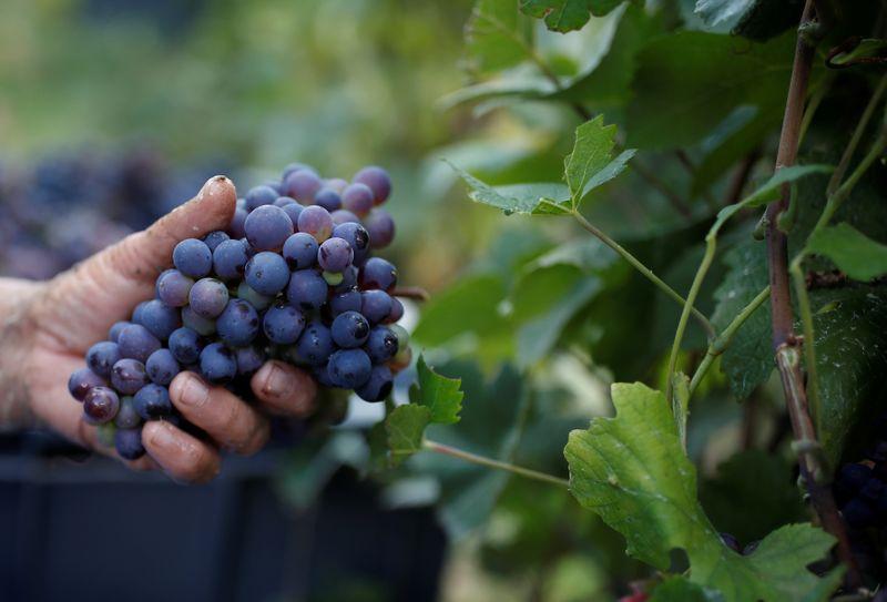 Droits de douanes: Paris fait pression sur Bruxelles pour un fonds de soutien aux viticulteurs