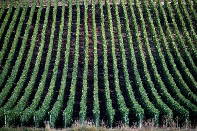 Les expéditions de champagne ont chuté de 18% en 2020 avec la pandémie